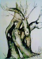 Baum auf dem Jakobsweg