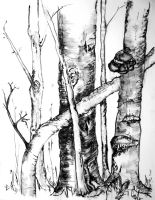 Baum im Rothaargebirge